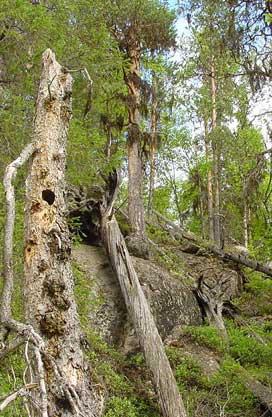 ettklickpaskogen.jpg