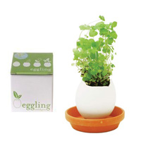 eggling-mynta-200.jpg