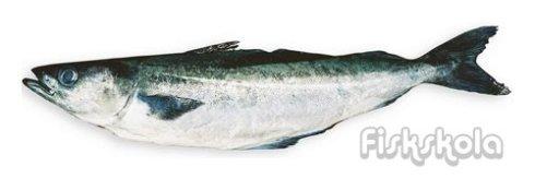 fiskskola